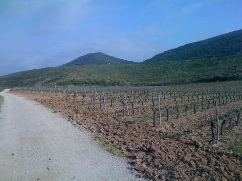 Many Vineyards Were Beginning to Show up Along the Path!