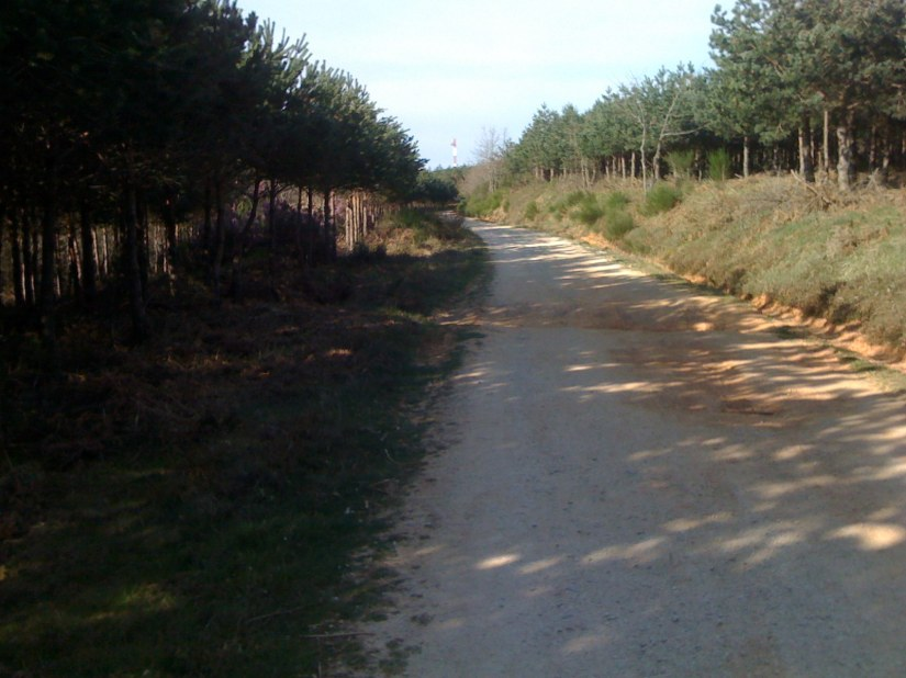 A Nice Stretch of Woods on the Path